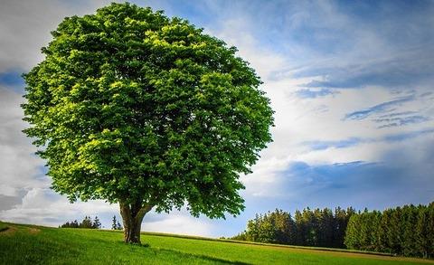 big-tree-3443533_640