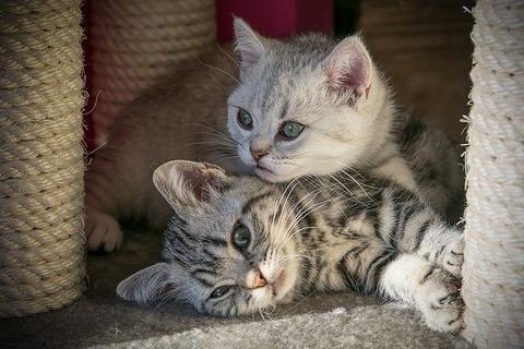 kitten-4257631_640