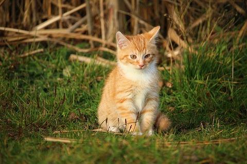 cat-1074875_640