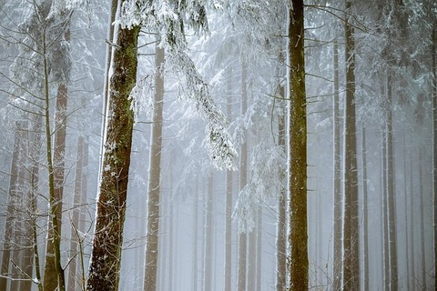 forest-2964073_640