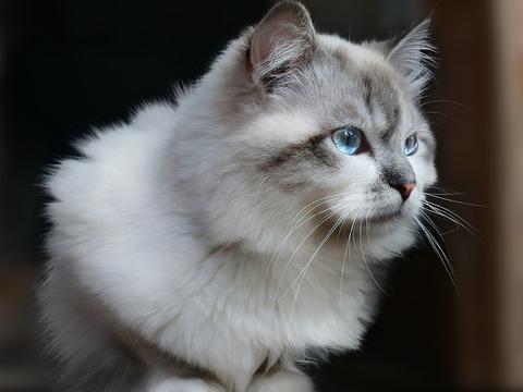 cat-2612189_640