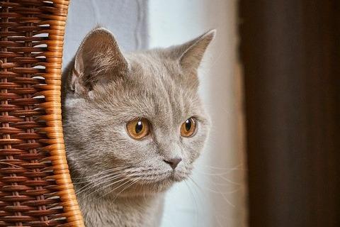 cat-4748330_640