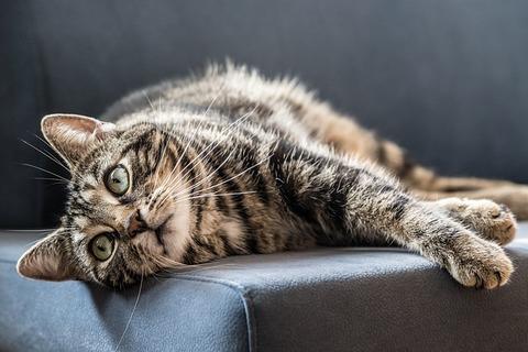 cat-2443842_640
