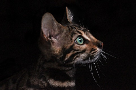 cat-3431519_640 (1)
