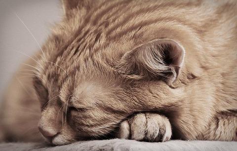 cat-4292054_640
