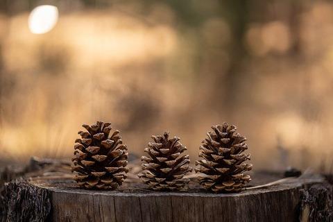 pinecones-4762992_640