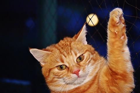 cat-1898665_640