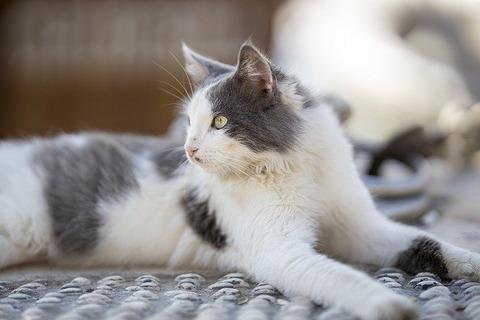 cat-4769978_640