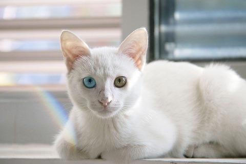 cat-1092371_640