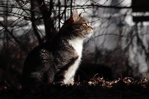 cat-4104921_640