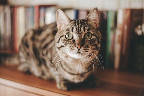 cat-4097325_640