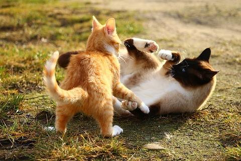 cat-1184736_640