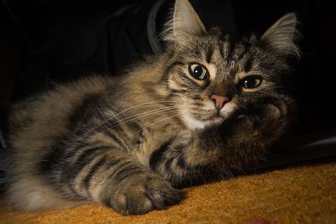 cat-2309120_640