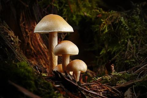 mushroom-3886466_640