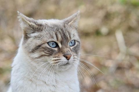 cat-4088887_640