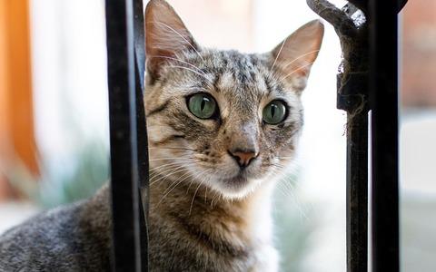 cat-4132391_640