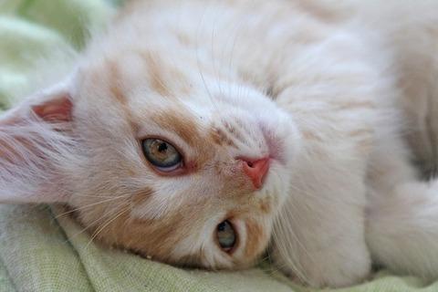 kitten-2651752_640
