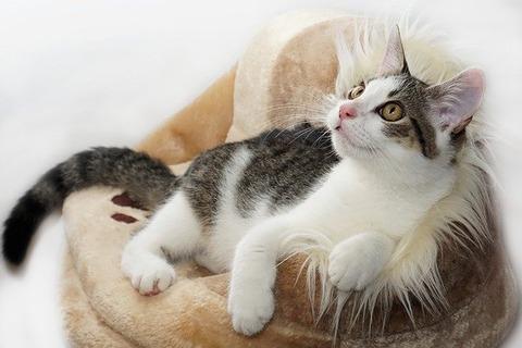 cat-4081971_640 (1)