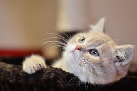 cat-1796843_640