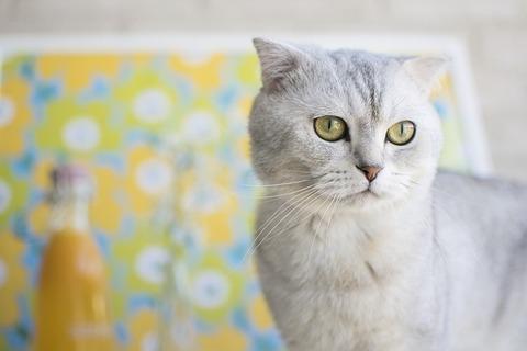 cat-2331692_640
