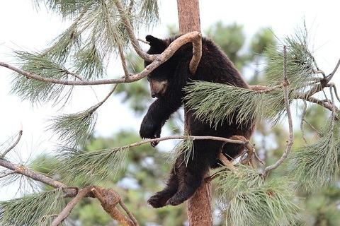 bear-1484616_640