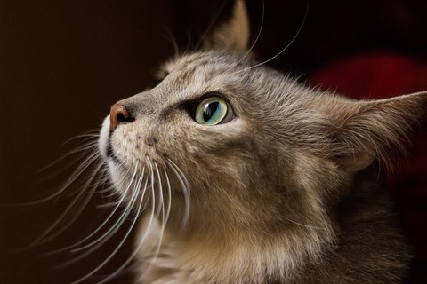 whiskers-3919668_640