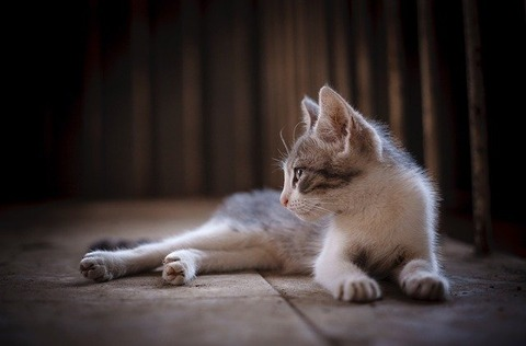 cat-2738359_640