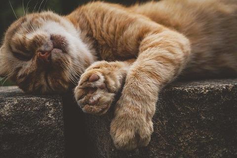 cat-3623703_640