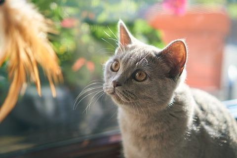 cat-4436152_640