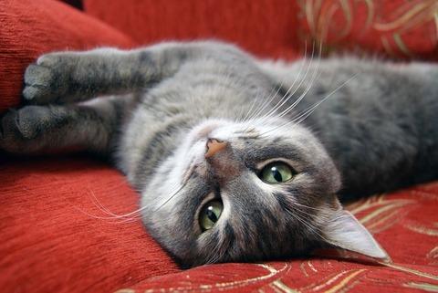 cat-2065710_640