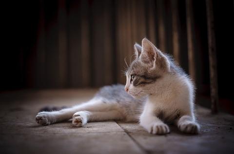 cat-2738359_640 (1)