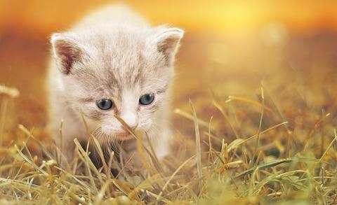 cat-1992140_640