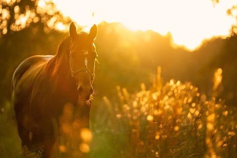 horse-4810484_640