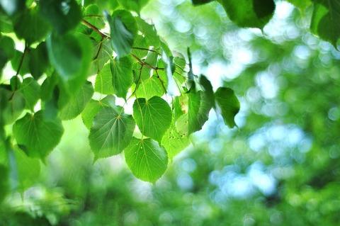 leaves-4325098_640