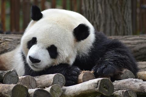 panda-3911623_640