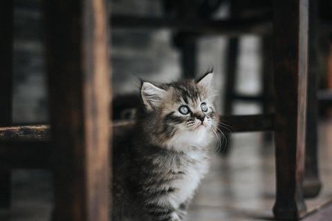 cat-4912211_640