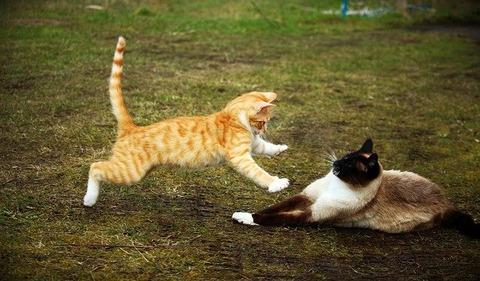 cat-1234945_640