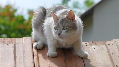 cat-3974408_640