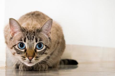 cat-2590464_640