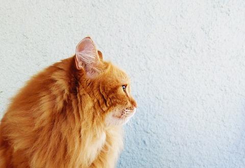 cat-2716333_640