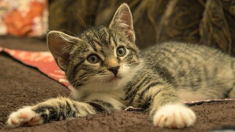 cat-4626682_640