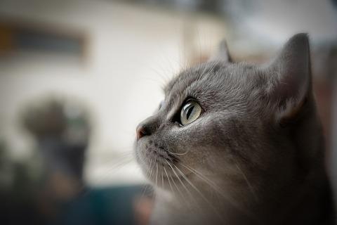cat-4228152_640