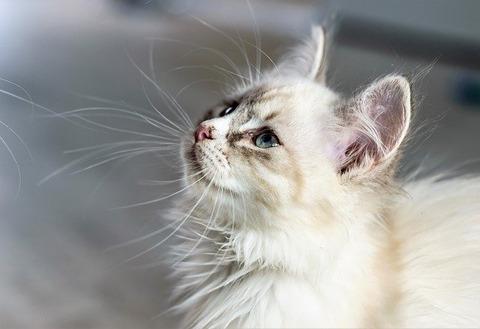 cat-2197024_640