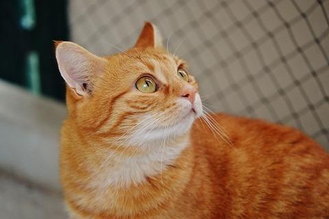 cat-1045081_640