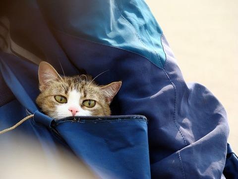 cat-214973_640