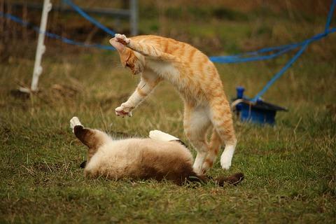 cat-1234991_640