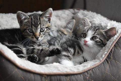 cat-4282123_640