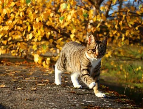 cat-1033597_640