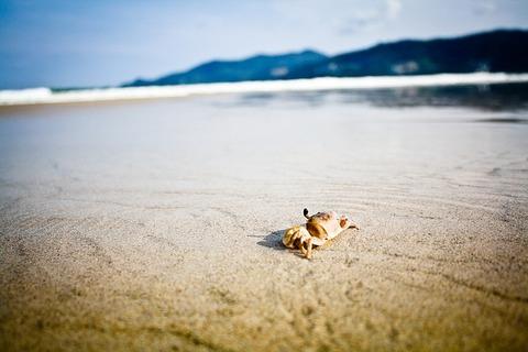 crab-1246573_640