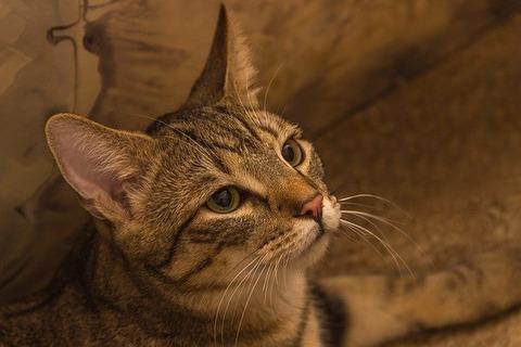cat-5136313_640